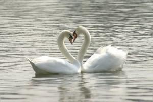Liebe&Beziehung_ImLichte.net